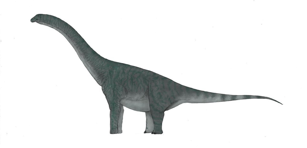 Titanosaur Sauropod by Dragonthunders