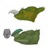Unusual allocenic chameleons by Dragonthunders