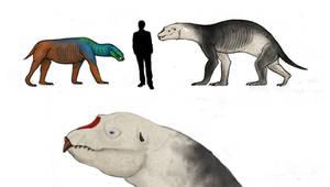 All todays, Elephant seal the titan carnivora