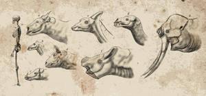 Holocene park, the bizarre cenozoic herbivores by Dragonthunders