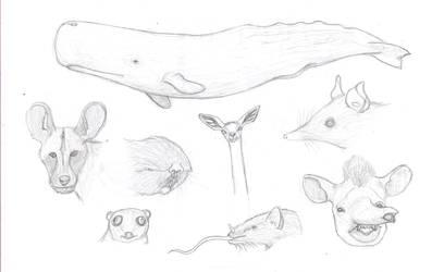 Mammal face practice sketches