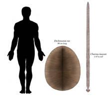 Ediacara, sword and shield edition