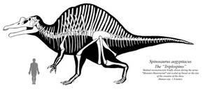 Cursed Paleo: the Triplospino skeletal
