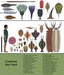 History size chart: Cambrian