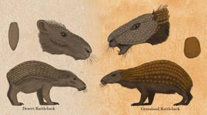 Rattlebacks, the scaled Caviomorphs
