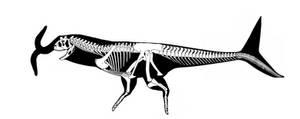 Carnofaarus skeleton