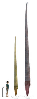 History size chart: the cryptic ordovicia megacone
