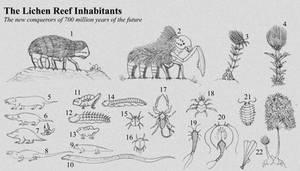 TFIF concept, Lichen Reef inhabitants