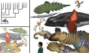 Kritauri fauna, Aesthetheroda diversity
