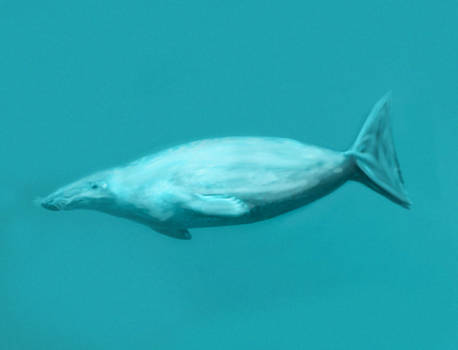 Spectember D25: Baikal Muzzled Emperor Seal