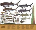 History size chart: Devonian