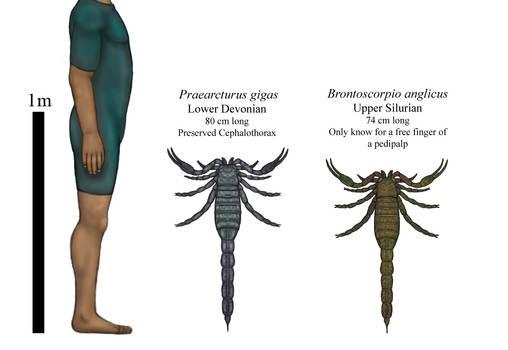 History giants, Early paleozoic monster scorpions