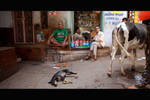 Streetlife of India 001