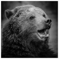 Black bear. by DrDrum666
