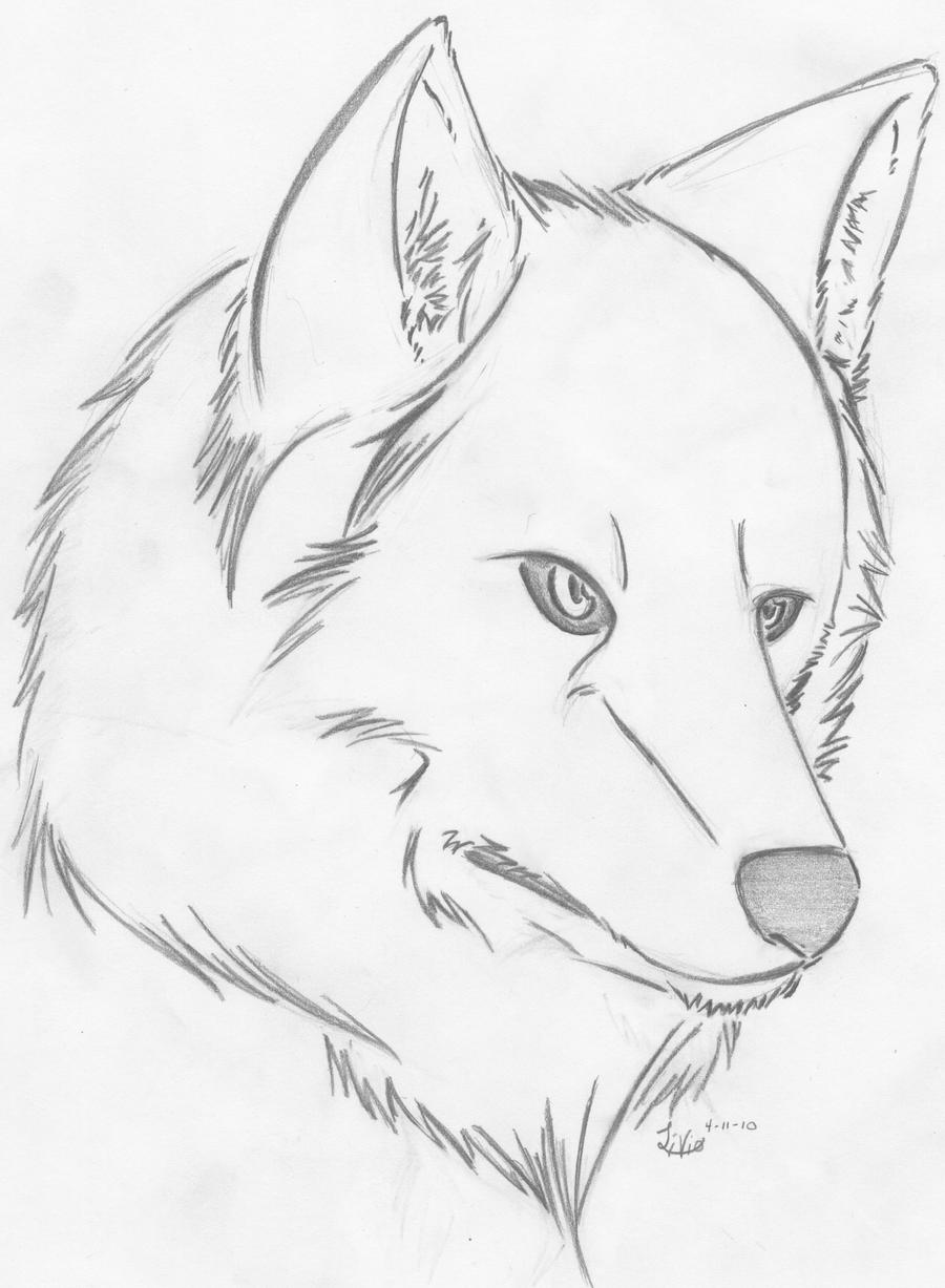 How To Draw A Wolf Head Side View On Scratch