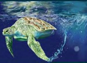Sea Turtle :REALISM: by L-i-m-e