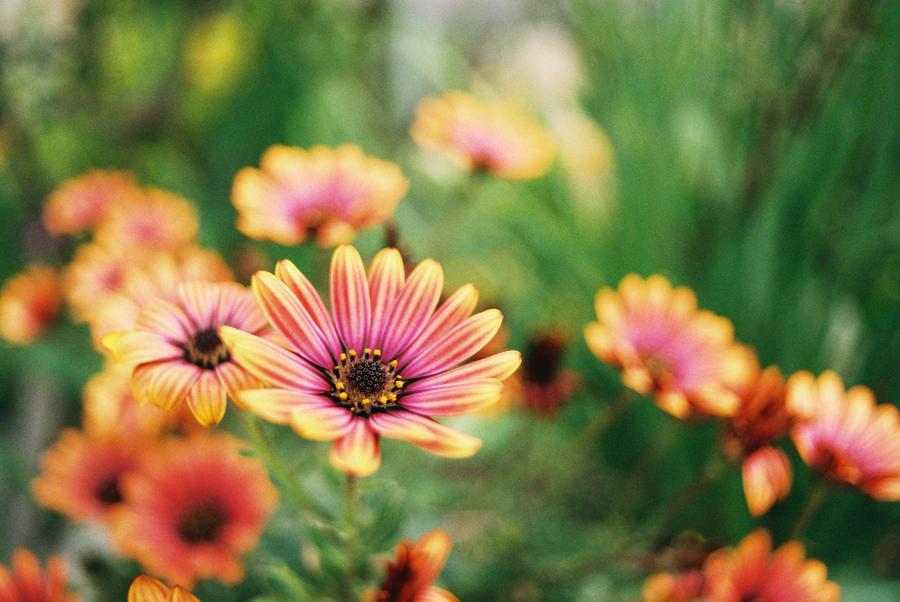 secret garden by redgreenboo