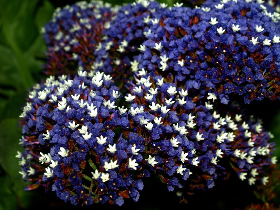purple and white flowers  flower, Beautiful flower
