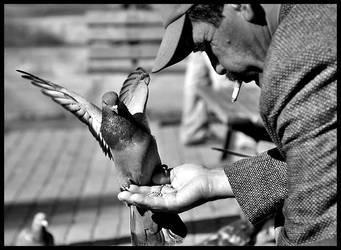birdie ii by ozakinci