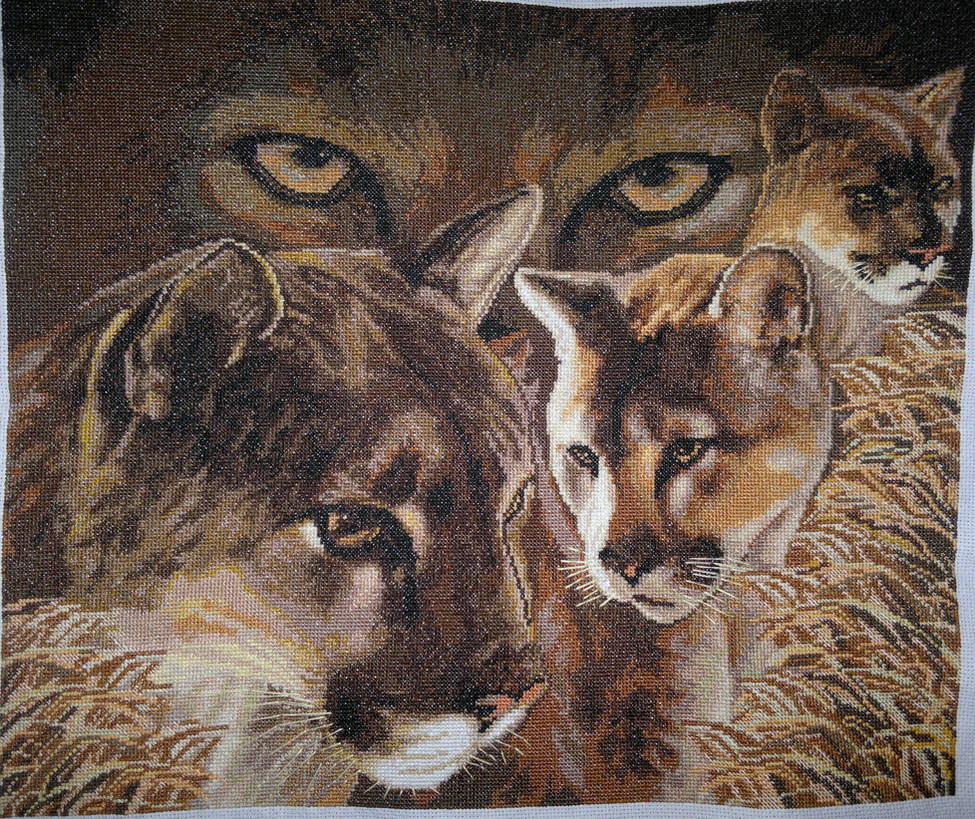 Puma's glare (Cross Stitch) by ouraion