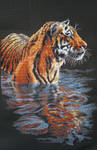 Tiger in water (Cross Stitch)