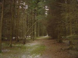Forest by para-bellum