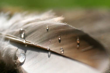 feather by wiis