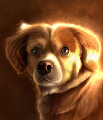 Pet portrait 3