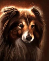 Pet portrait 11