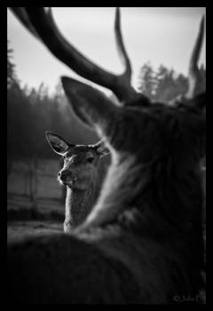 Hello my deer