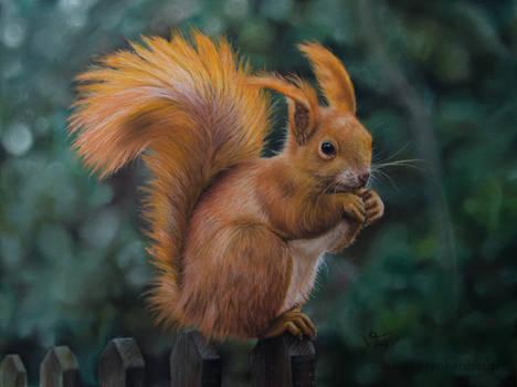 Squirrel - Pastel Pencil Drawing