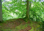 Yorkshire Grove