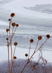Icy Prickles by TheSleepyRabbit