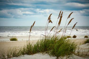 Sea Oats by FloridaSoul