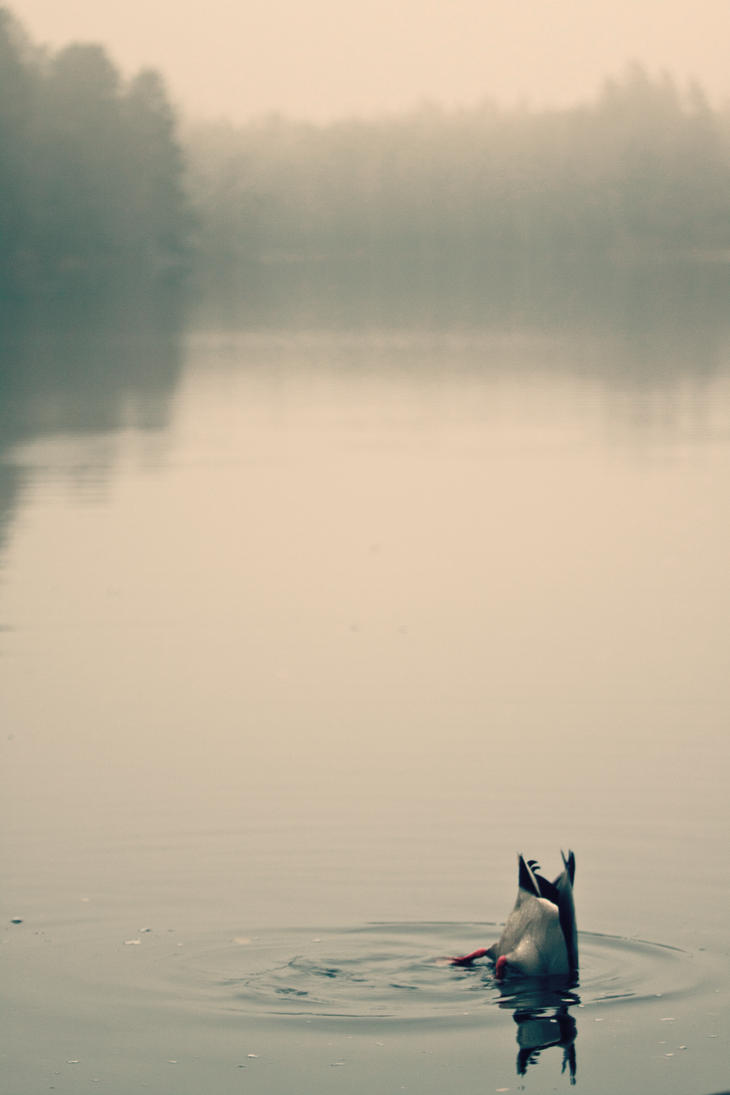 dive in the mist by MichaelTheGrey