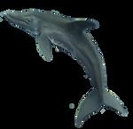 Radley Dolphin by TheStory137