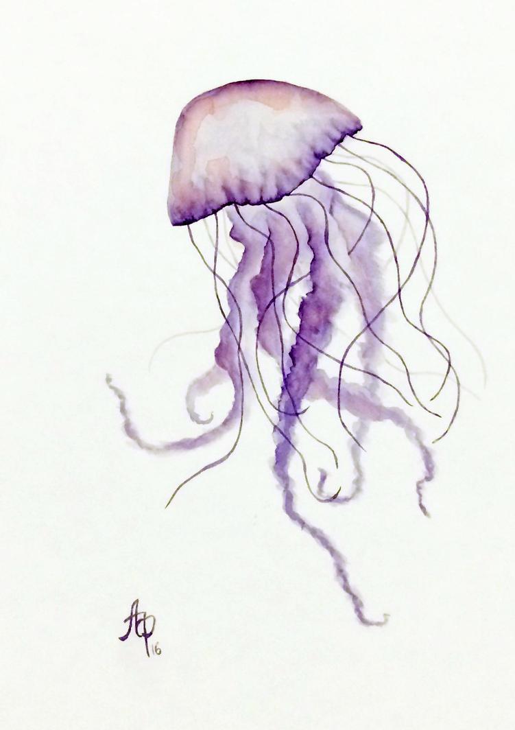 JellyFish1 by santagro