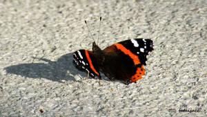 broken wings by tataijucc