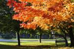Autumn at Hungary