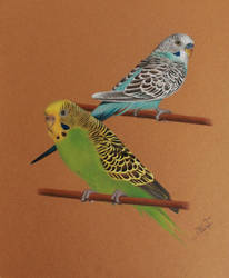 Budgies by LittleRamona