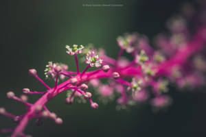 Perfect Nature 70. by MCN22