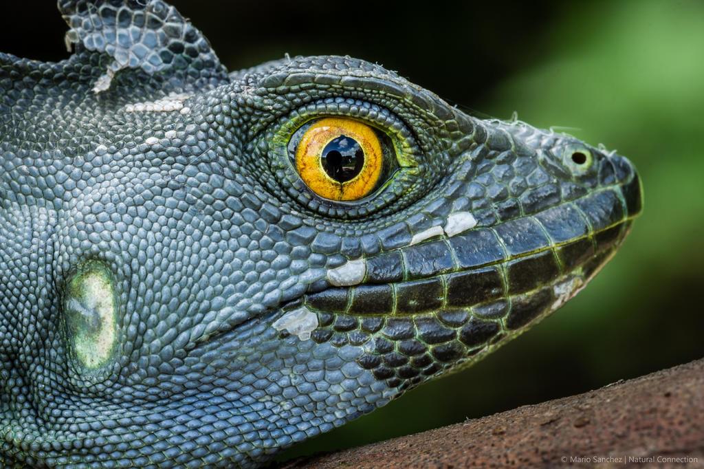 Amphibians Journal APN Features: R...