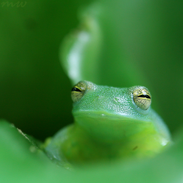 Happy Frog by FriendFrog
