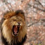 Roar by FriendFrog