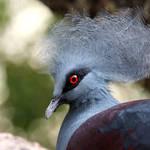Pleased Pigeon by FriendFrog