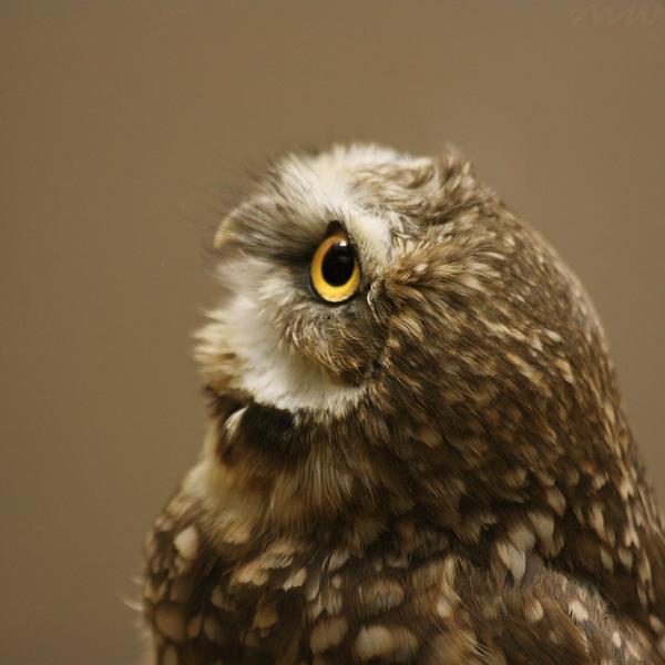 Little Owl by FriendFrog