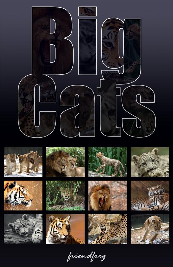 Big Cats Calendar by FriendFrog
