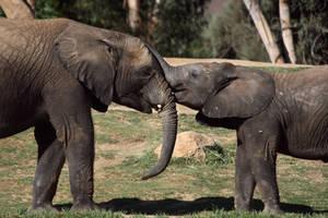 Elephant Kisses by FriendFrog