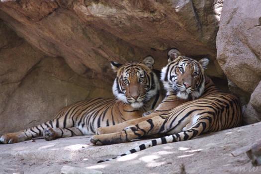 Tiger Bros
