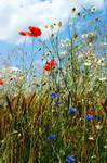 Summer  Flowers 3